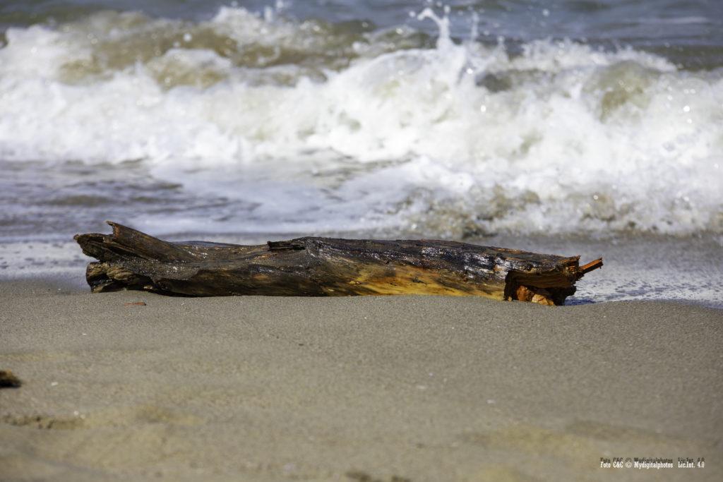 Tronco in riva al mare